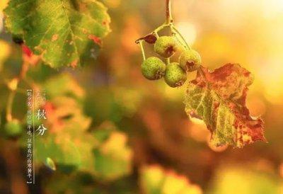 秋分节气的含义是什么